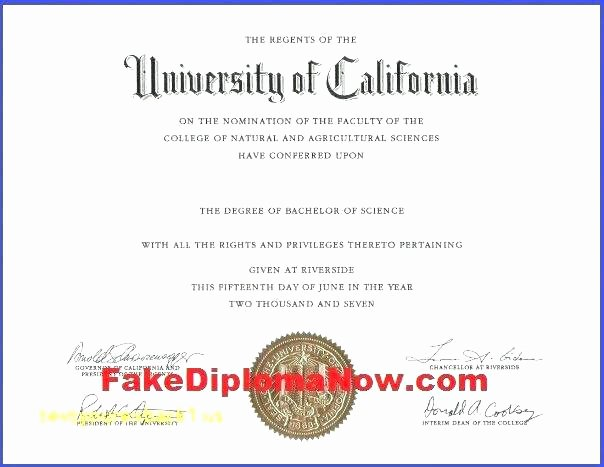 Bachelor Degree Template Fake Degree Template University