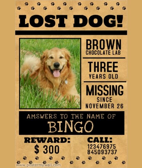 10 Missing Lost Pet Poster Templates