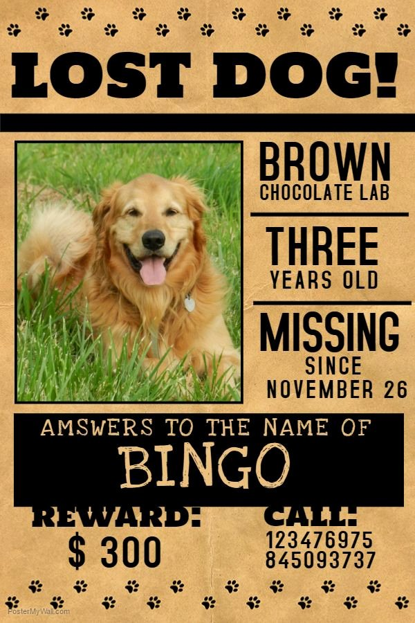12 Best Lost Pets and Pet Adoption Flyers Images On