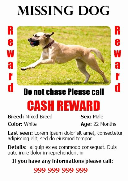 20 Best Lost Dog Flyer Templates Demplates