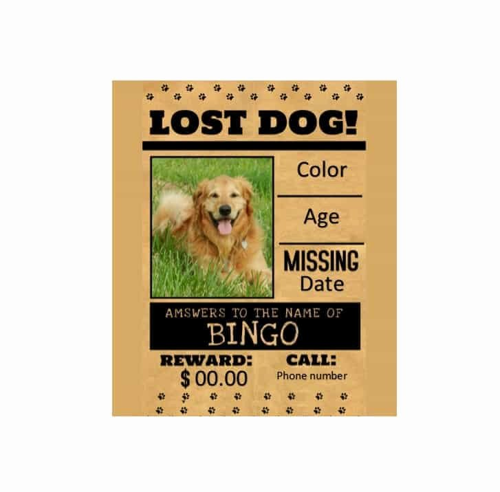 40 Lost Pet Flyers [missing Cat Dog Poster] Template