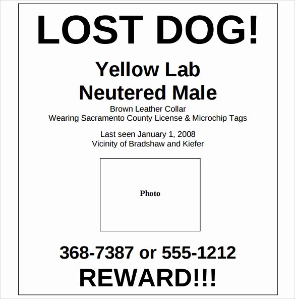 8 Lost Dog Flyer Templates