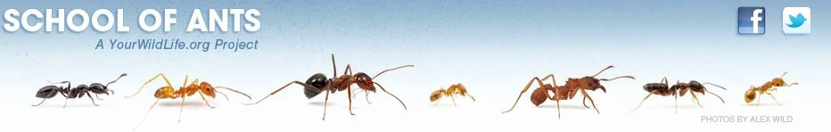 Citizen Science In the Classroom School Of Ants