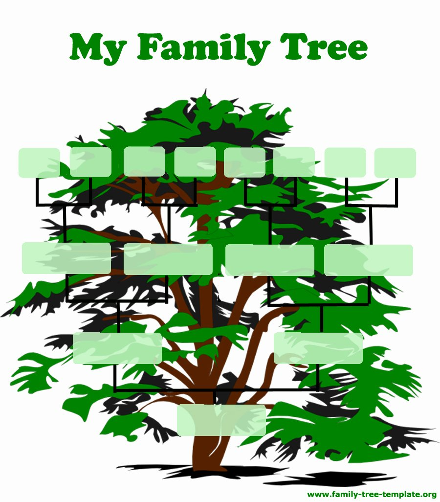 Family Tree Chart Clipart – Cliparts