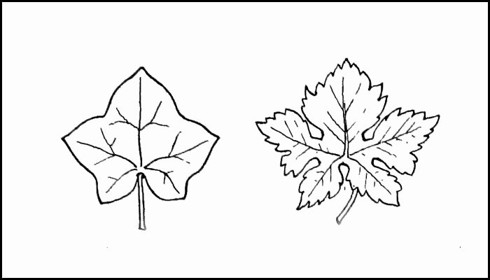 Leaf Template Printable Leaf Templates