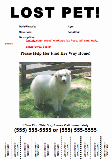 lost dog template flyer