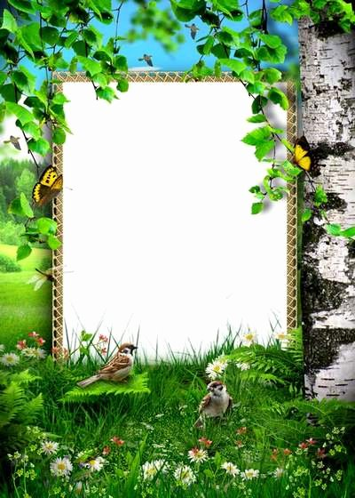 Nature Frames for Shop Frame Design & Reviews