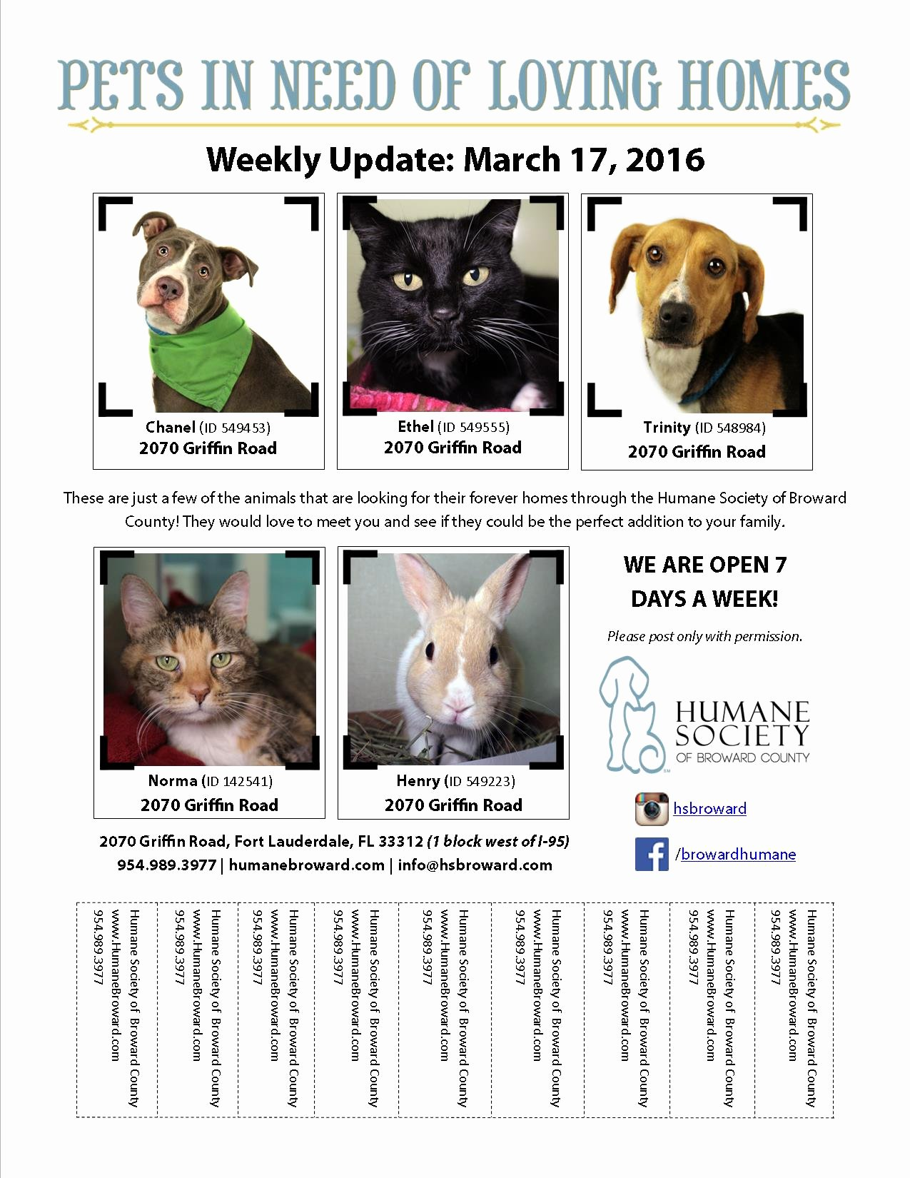 Pet Flyer March 17 2016 Humane society Of Broward
