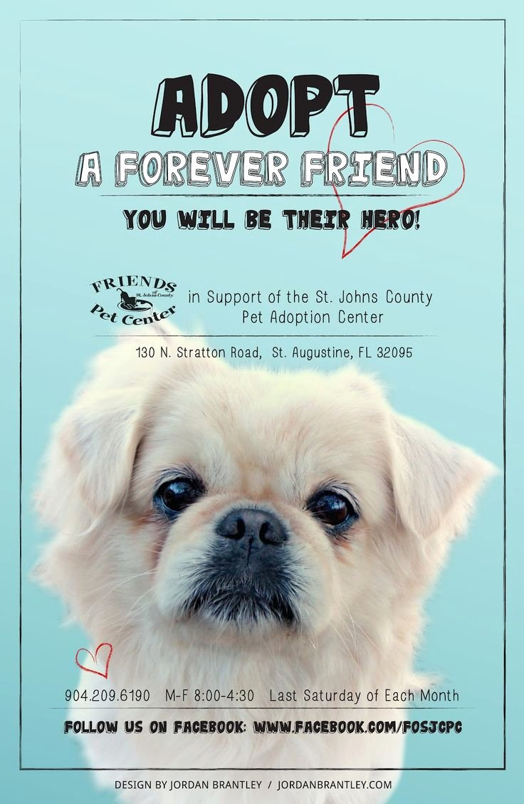 Pet Rescue Design Animal Rescu Lost Pet Poster