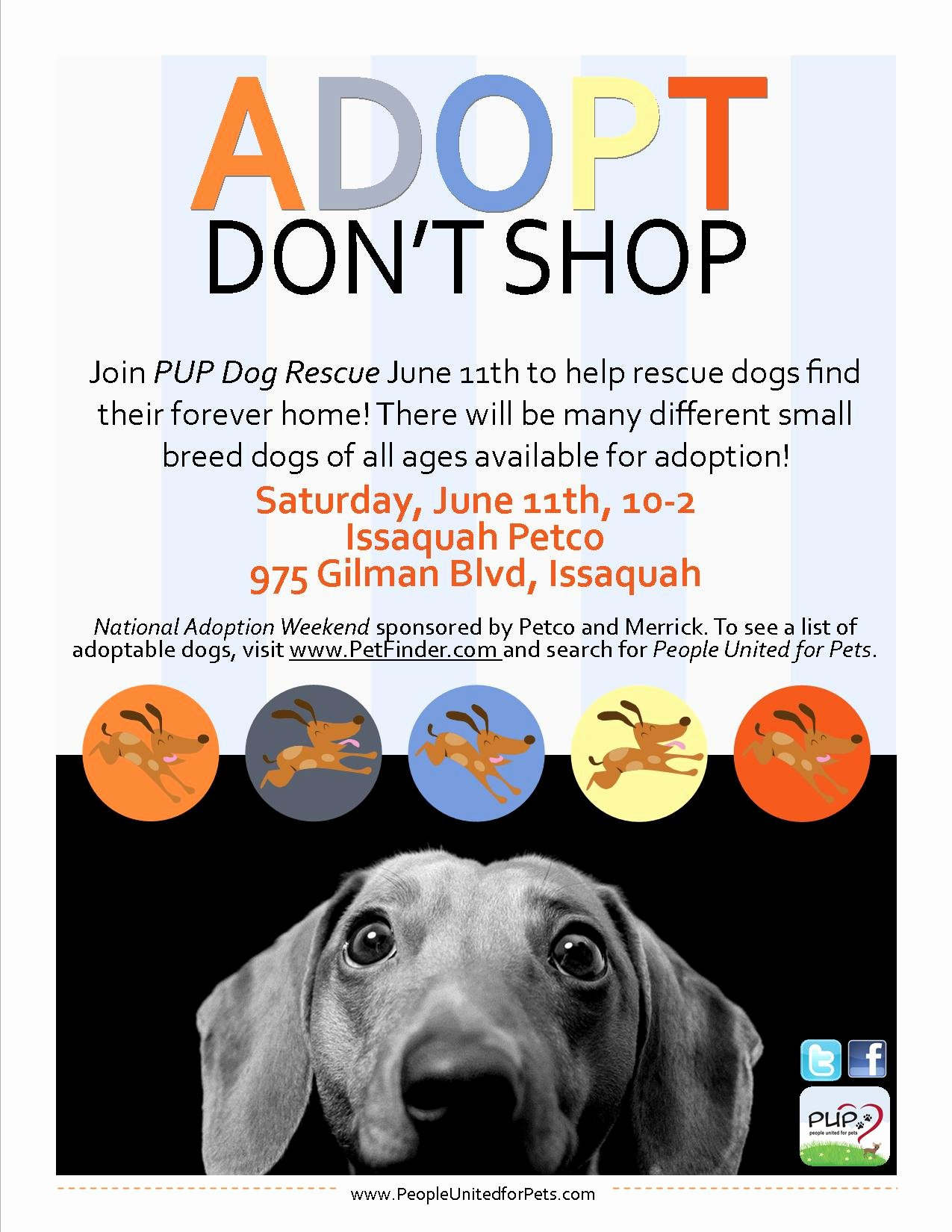 Pup Dog Rescue Flyers – Portfolio Michelle Fears